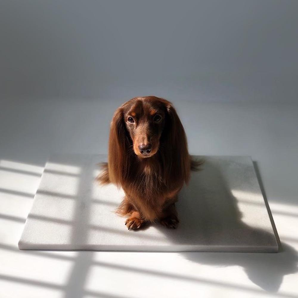 강아지 고양이 미끄러움 방지 기능 천연 대리석 논슬립 쿨매트